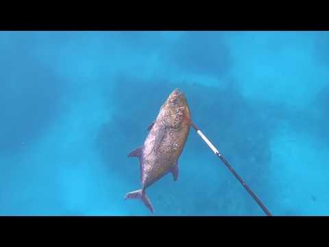 Spearfishing Oahu Hawaii