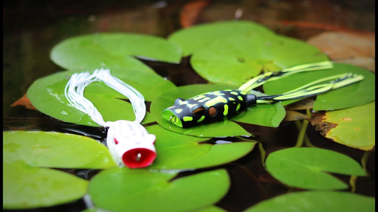 Top Water Frogs