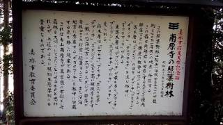 美祢市の文化財 伊佐町 南原寺の照葉樹林