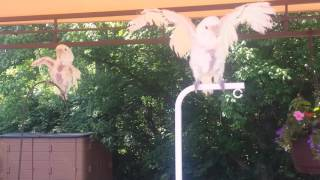 """Cookie and Peaches """"flying"""""""