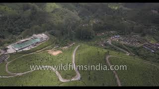 Neat rows of tea bushes near Madupatty Tea Factory en route Mattupetty Dam in Munnar, Kerala