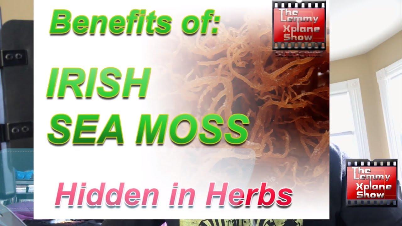 Benefits of Irish sea moss