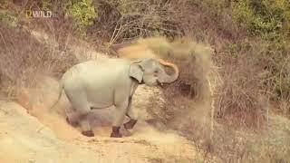 Strange Animals of Asia :National Geographic Documentary 2017 HD: