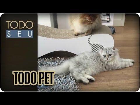 Como Tornar A Convivência Entre Gatos Mais Harmoniosa? | Todo Pet - Todo Seu (23/03/18)