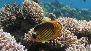 مخاوف على الشعاب المرجانية في خليج العقبة
