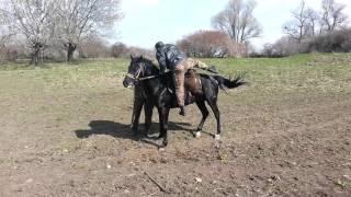 Адыгэш ( Кабардинская порода лошадей )