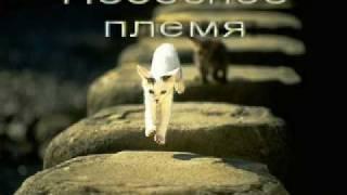 Коты-Воители Новое пророчество