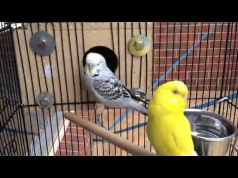 Repeat Bird Cages by theclutteredwife - You2Repeat