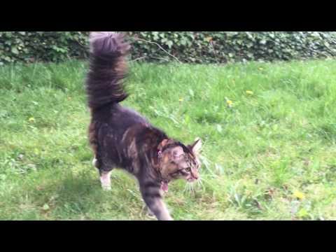 Kitty with big bushy tail