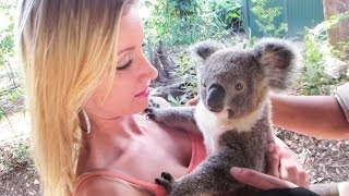 Repeat youtube video KOALA CUDDLING