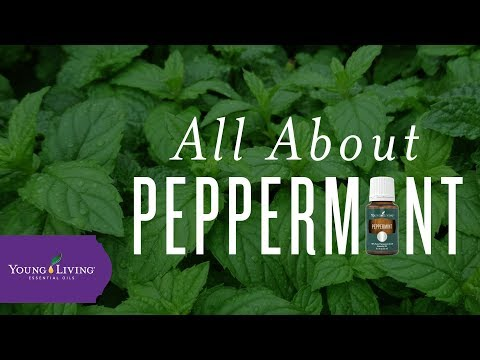 all-about-peppermint-|-young-living-essential-oils