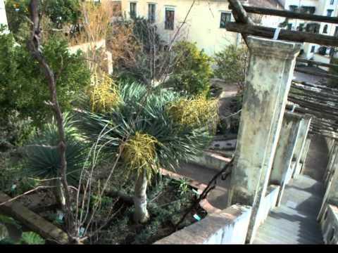 medieval-medical-herbs'-garden-in-salerno,-italy