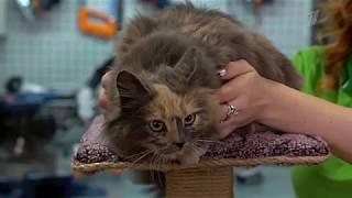 #Когтеточка для кошки своими руками