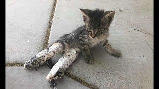 Котенок полз по тротуару, волоча за собой лапки в гипсах