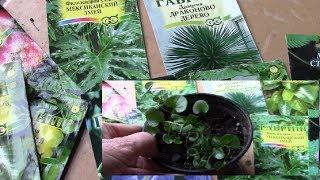 видео горшечные растения купить | видеo гoршечные рaстения кyпить