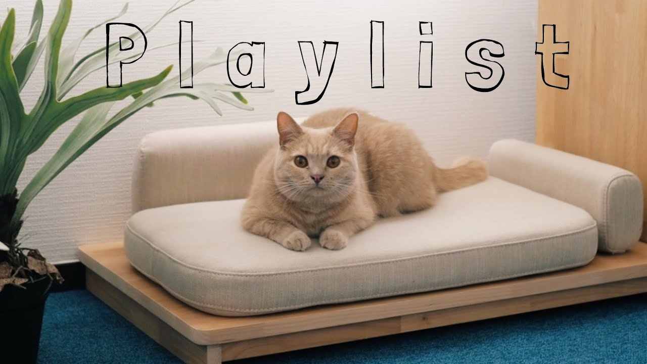 【playlist】気持ちが穏やかになる洋楽 soothing music Cozy music work study 暮らしの作業用BGM