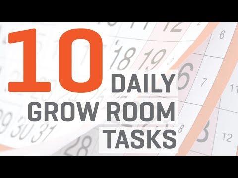 Hydroponics Indoor Grow Room: 10 Daily Tasks