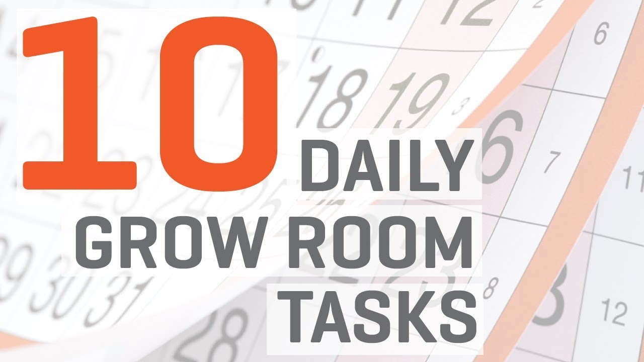 hydroponics indoor grow room 10 daily tasks youtube