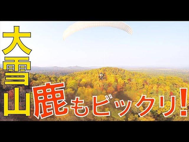 【北海道・大雪山】どうやら鹿の聖域に飛び込んでしまったようだぜ!
