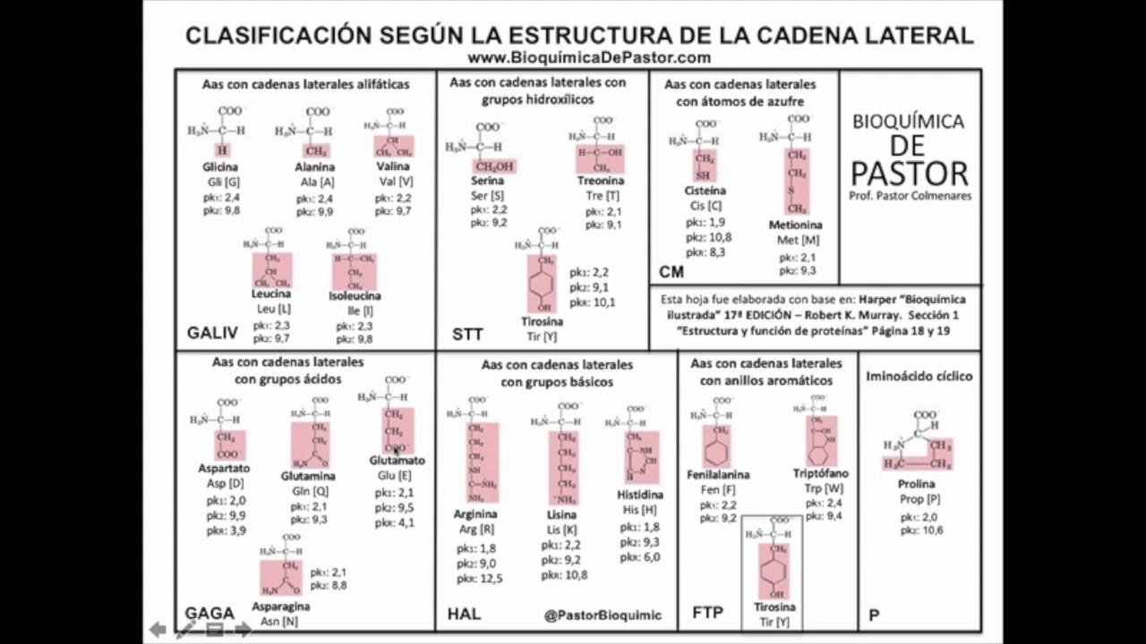 Clasificación De Los Aminoácidos Según Cadena R Y Polaridad Parte Ii
