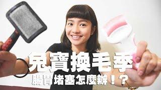 【侑敏頻道】兔寶換毛季 腸胃堵塞怎麼辦?