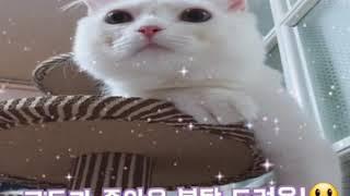 어린 고양이 목욕 했어…