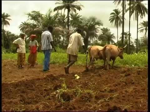 """""""Une agriculture au service du monde rural"""" (pour l'ong RGTA)"""