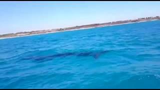 Кит у берега. Израиль. Окрестности Хадеры.(Случай на рыбалке., 2016-06-20T19:10:48.000Z)