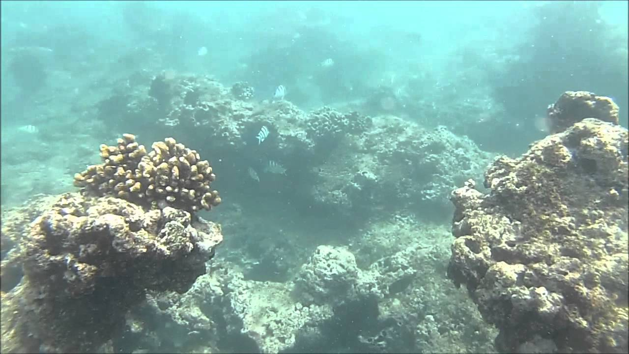Snorkeling Waikiki Mlcd Queen S Beach Snorkel Around Oahu