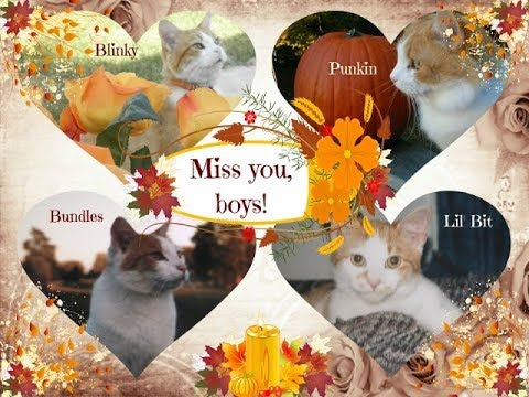 In Memorial💔: Our Tennessee Born 😿Cats 🐈- Bundles, Lil Bit, Punkin & Blinky