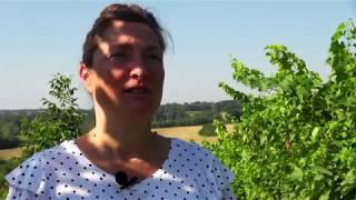 Réchauffement climatique : des arbres dans les vignes contre le dérèglement