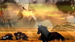 Julio Iglesias y los Temerarios - Esos amores