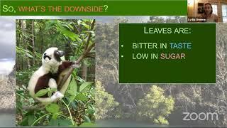 Lemur Science 201: How Lemurs survive on leaves