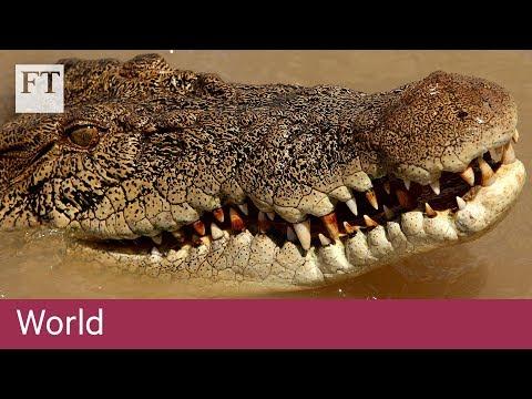 Crocodile farming in Australia   World