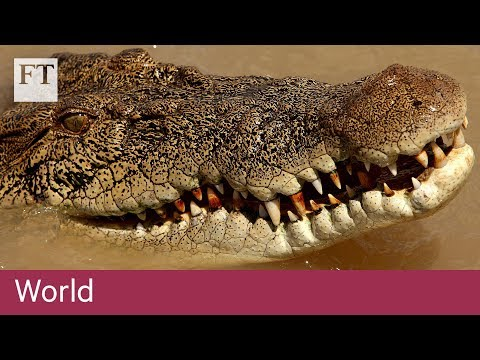 Crocodile Farming In Australia | World
