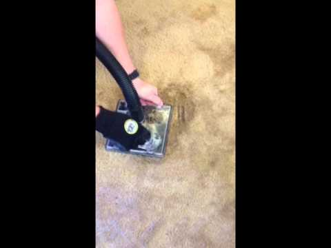 Carpet Cleaning Las Vegas - NaturalDry Pet Urine Carpet Extraction Process