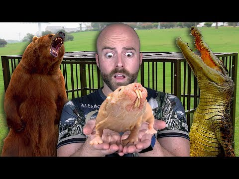 The Most Dangerous Exotic Pets People Actually Have!   Top 10