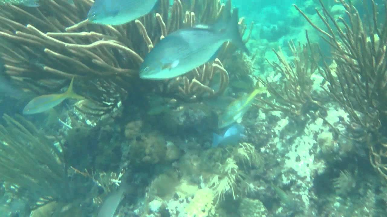 Snorkeling At Alligator Reef Lighthouse Isla Morada The Keys St Pete Beach
