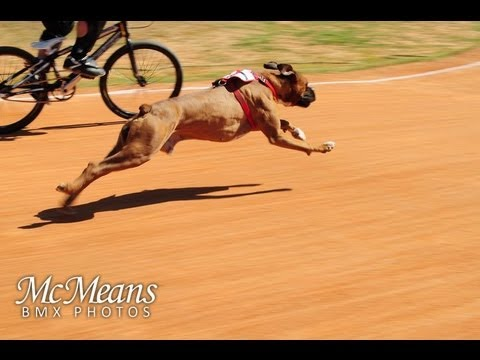 Dog vs Human BMX Race