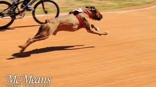 Download Dog vs Human BMX Race Mp3 and Videos