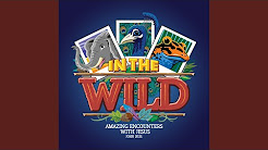 In The Wild VBS 2019 Songs - YouTube