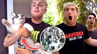 I STOLE BROTHER LOGANS NEW PUPPY!! (rip kong)
