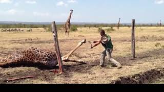10 times when humans have saved animals life