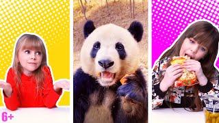 ПОПРОБУЙ НЕ СКАЗАТЬ Вау Ого или засмеятся ЧЕЛЛЕНДЖ c ЖИВОТНЫМИ Самые смешные видео с TikTok
