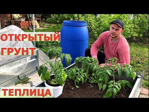 Вопрос: Как формировать низкорослые томаты?