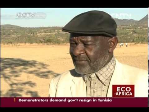 Rejuvenating Zimbabwe's forests