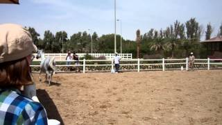 Arabian horse farm in Kuwait
