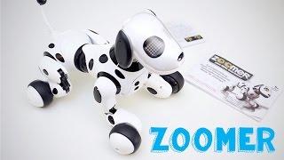 Zoomer: il cane robot per bambini - Spin Master(Zoomer è il nuovo cagnolino robot per bambini della Spin Master. Risponde a oltre 30 comandi e ha sensori sensibili non solo vocali ma anche si spazio e ..., 2014-10-19T13:43:14.000Z)
