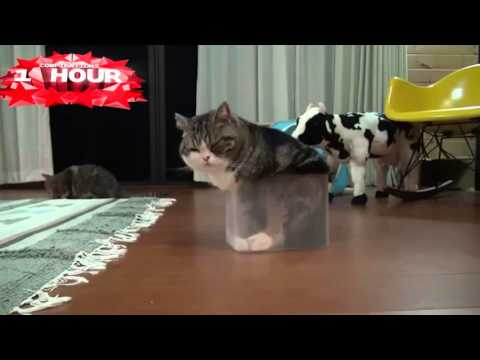 1 HOUR of Funny Cat & Cute Kittens Fail Videos - Funny Kitty Cat Video April 2015