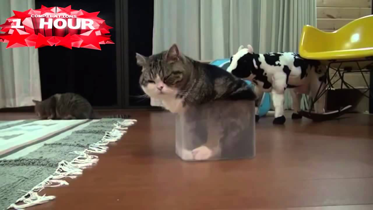 1 HOUR of Funny Cat & Cute Kittens Fail Videos Funny Kitty Cat